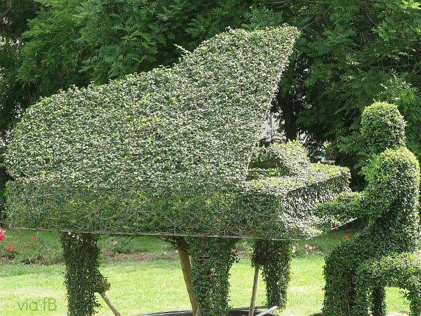 piano jardi